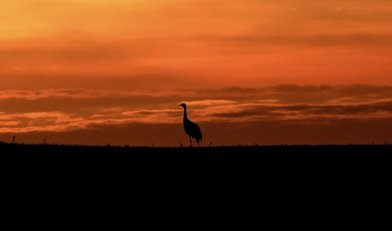 Allein im Sonnenuntergang