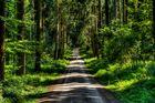 (allein) im Wald