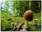 Alleine steh ich hier im Walde....