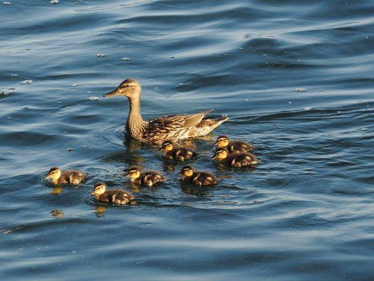alleinerziehend Mutter