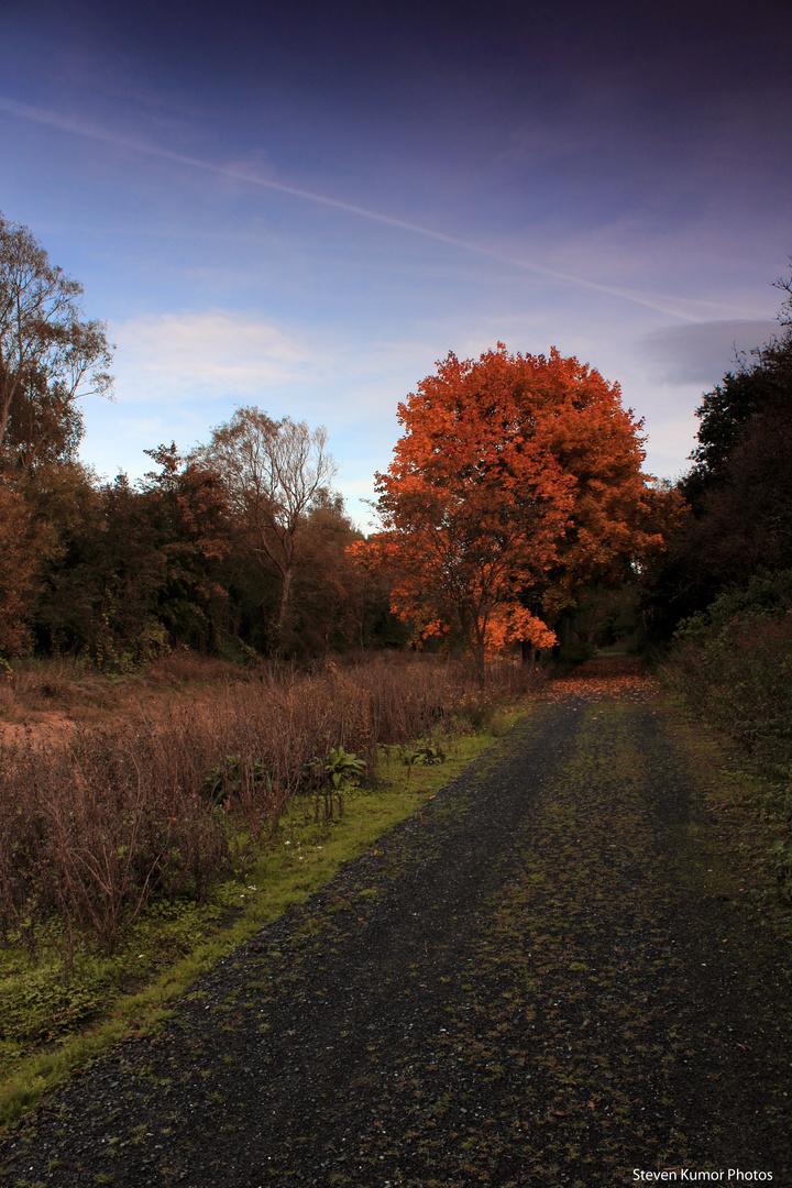 Alleinstehender Herbstbaum...