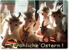 """Allen, die gern fotografieren : """"Fröhliche Ostern !"""""""