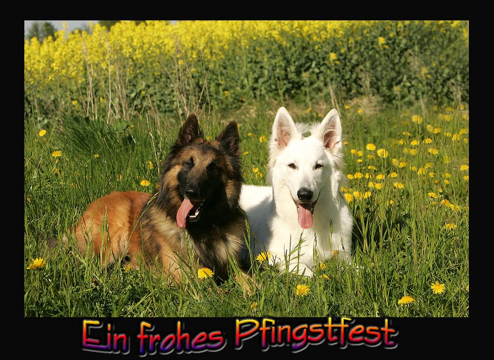 ALLEN FC'lern FROHE PFINGSTEN!!!!