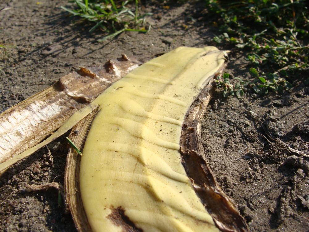 alles Banane....?