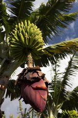 alles Banane...