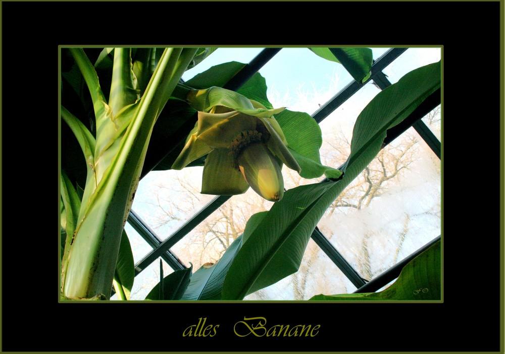 alles Banane .... in Oldenburg