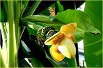 alles Banane .... in Oldenburg - Bild 3