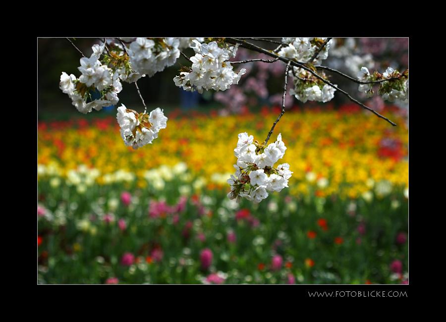 Alles Blüht
