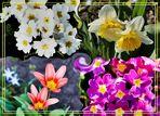 Alles dreht sich um den Frühling