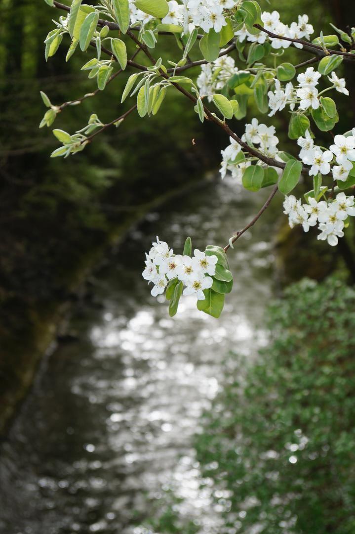 'Alles freuet sich und hoffet, wenn der Frühling sich erneut.'