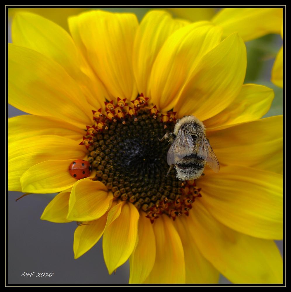 ... alles Glück der Erde und dass die Sonne immer fleißig für Euch scheinen soll...