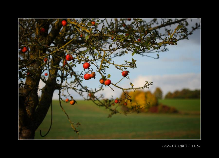 Alles Herbst