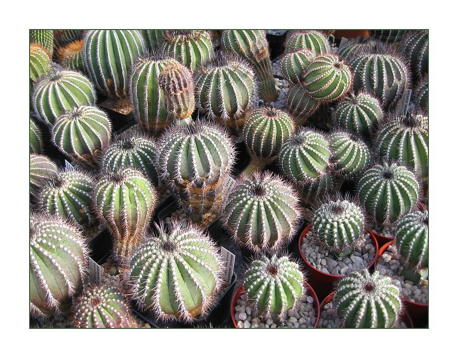 Alles Kaktus oder was?