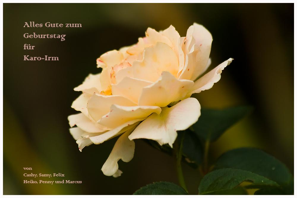 Alles Liebe zum Geburtstag für Karo-Irm