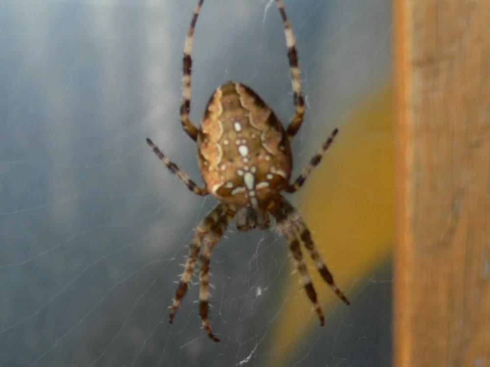 Alles Spinner