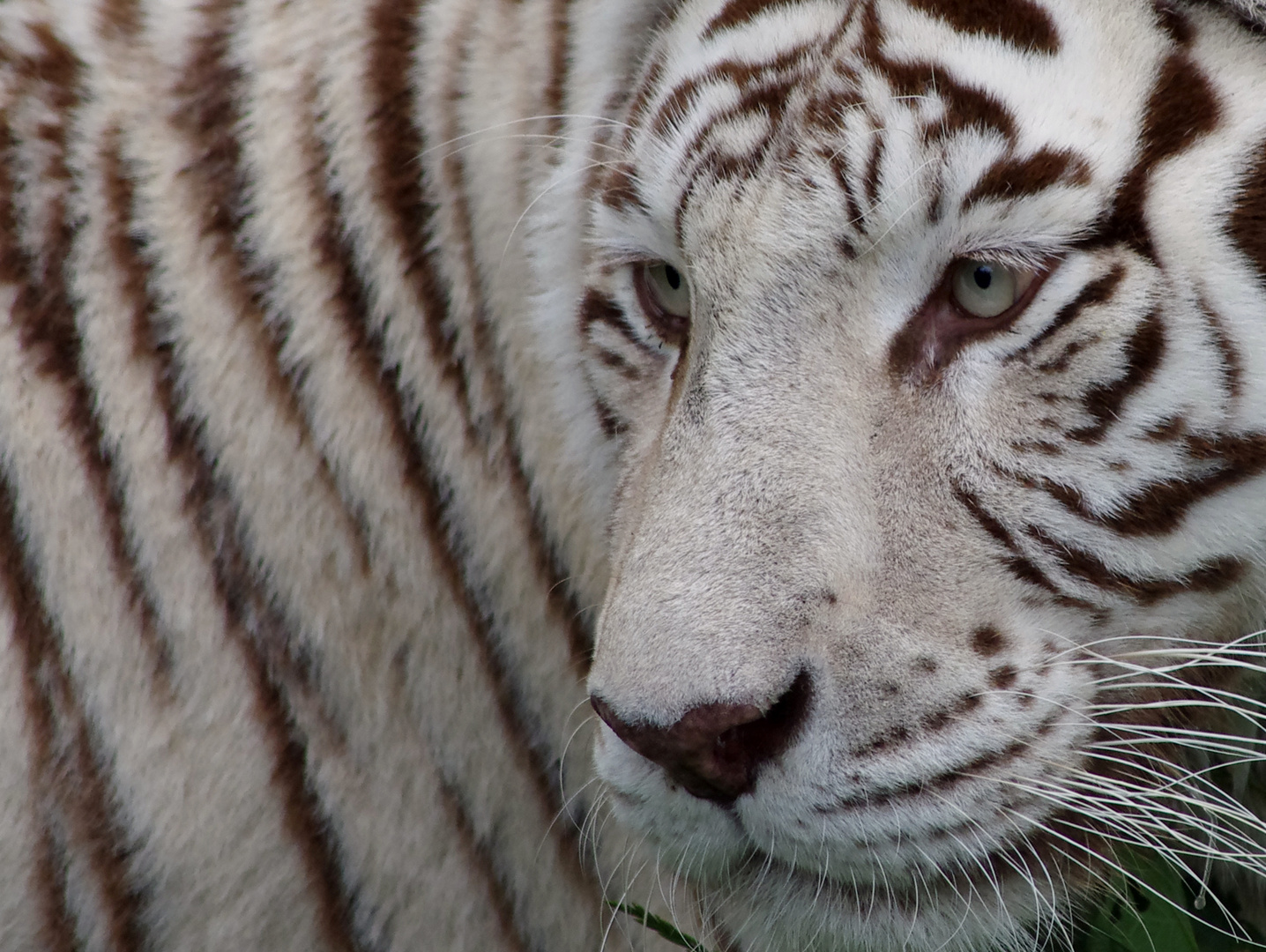 Alles Tiger, oder was?!