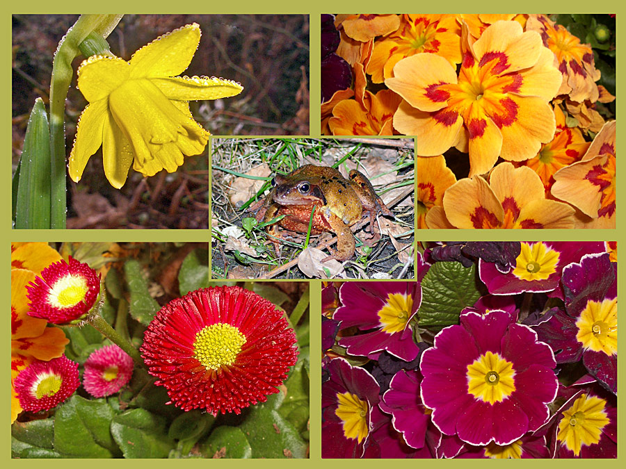 Alles was in meinem Garten blüht und rumläuft