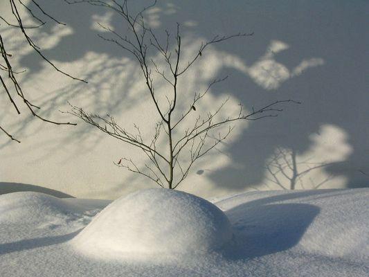 Alles wurde weiß zugedeckt nur die bäume wollten nicht