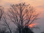 allez ! au dodo le soleil se couche