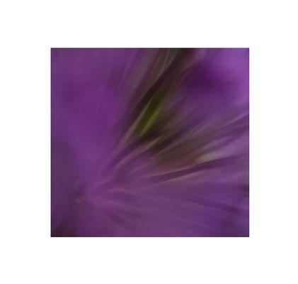 Allium-Welten