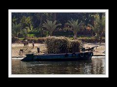 Alltag am Nil 08