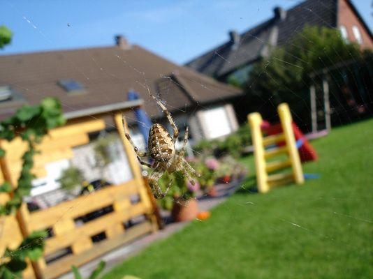 Alltag im Garten