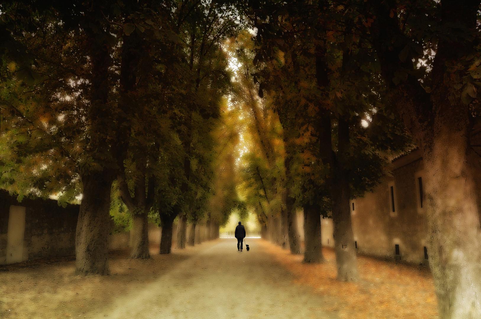 Alma solitaria