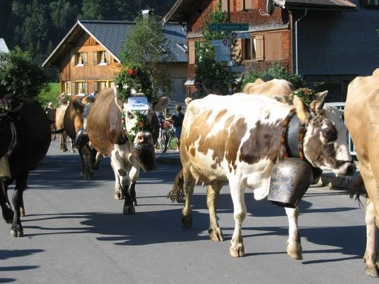 Almabtrieb in Au / Bregenzerwald