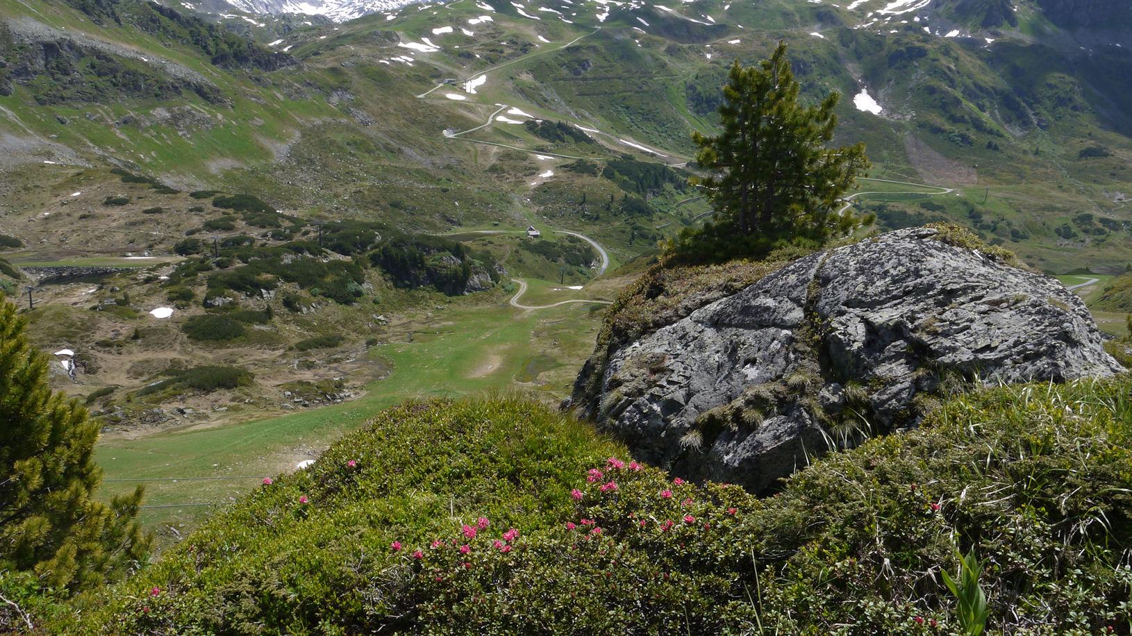 Almrauschblühn am Obertauern
