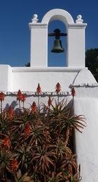Aloe vera mit Kapelle
