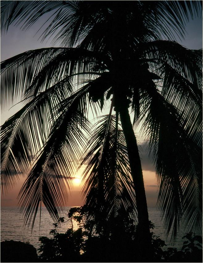 Aloha - Träume