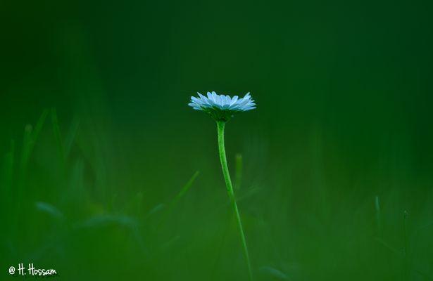 Alone, but Beautiful !!