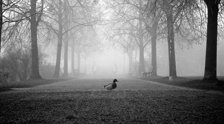 alone in the fog...