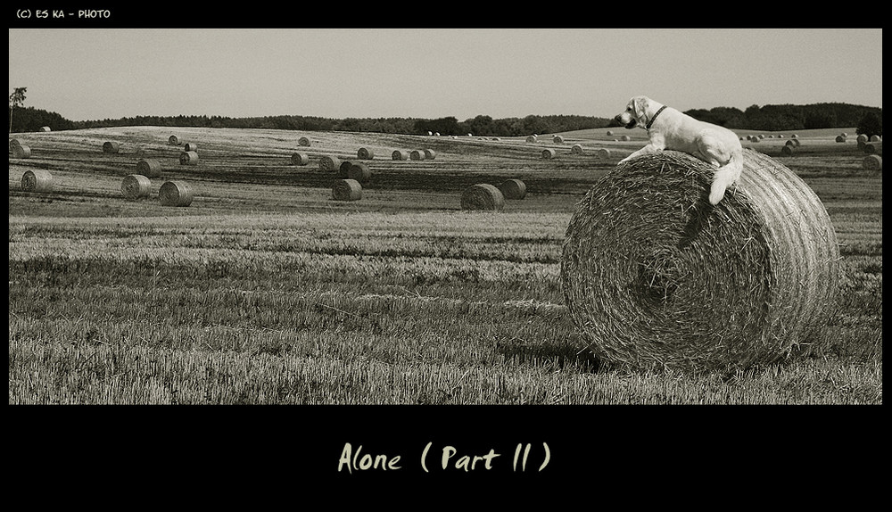 Alone - The long way home ( Part II )