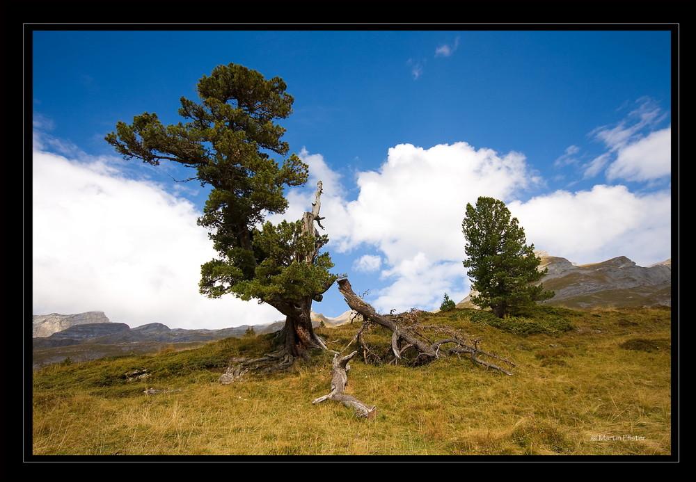 Alp Gental  im Berner Oberland, wo die Welt noch in Ordnung ist