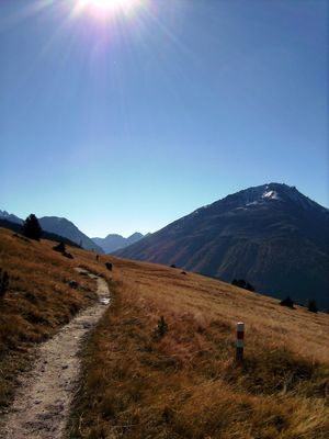 Alp La Schera II, Swiss National Park, near Zernez, Grisons