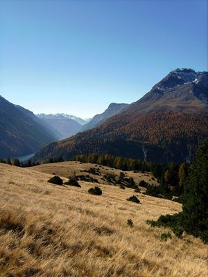 Alp La Schera - Swiss National Park - Engadin