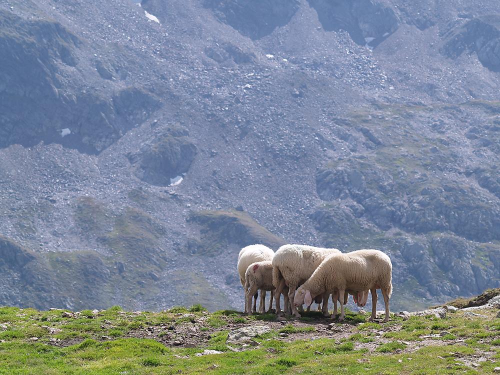 Alpenbewohner