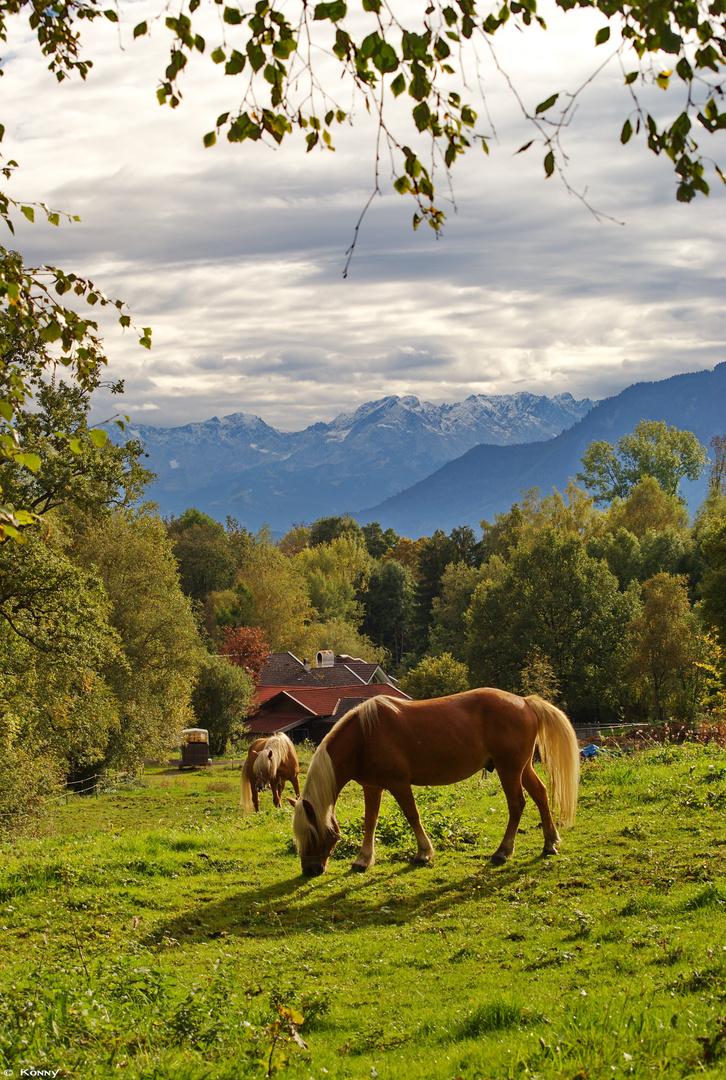 Alpenidylle im Blauen Land