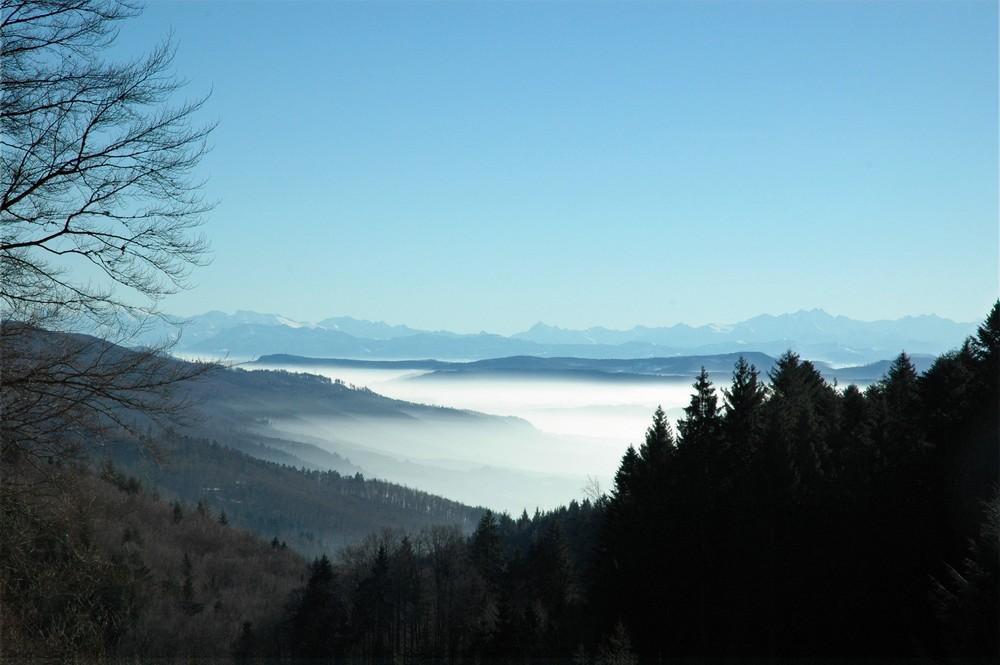 Alpensicht oberhalb von Atzenbach / Großes Wiesental Blick vom Südschwarzwald ins Berner Oberland