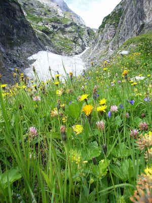 Alpenwiese