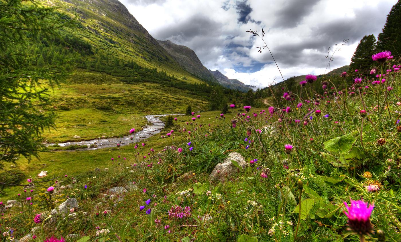 Alpenwiese Österreich