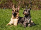 Alpina und ihr Schutzhund