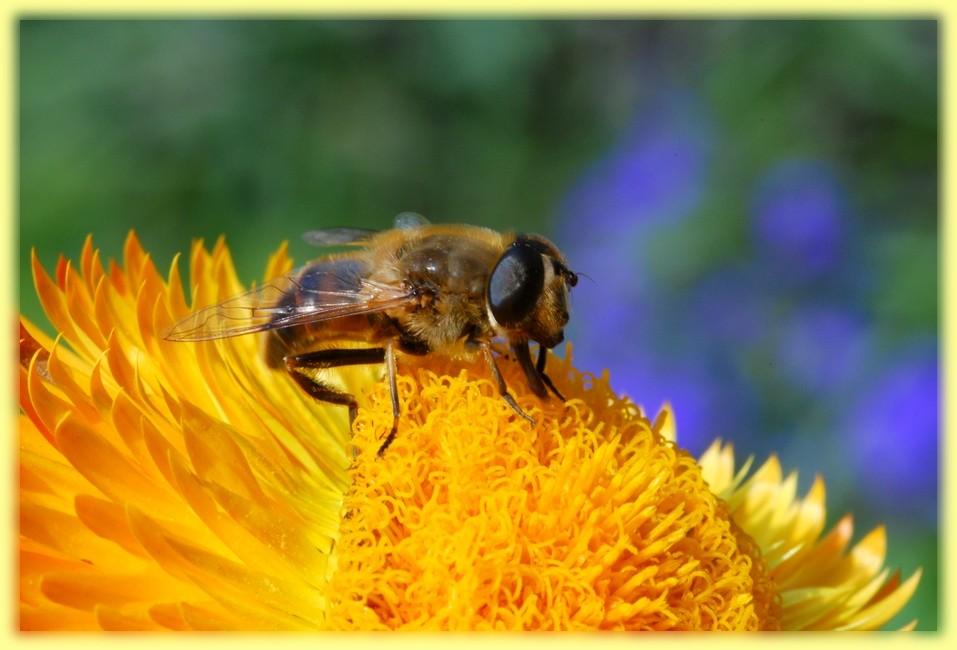 Als Biene getarnt ...