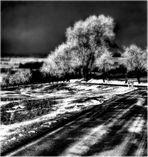 ... als der Winter ging VII ...