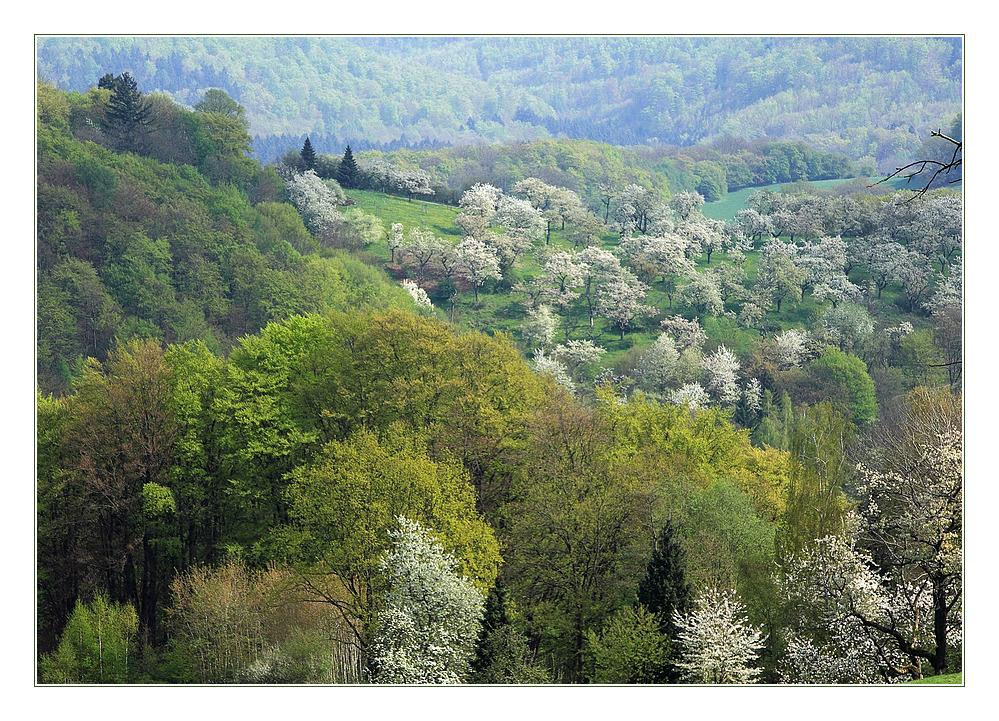 Als die Kirschen blühten... - in der Rühler Schweiz...