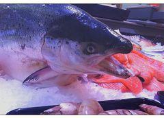 Als Fischkopf hält man besser die Schnauzte sonst landet man zurecht in dem Kältetresen...