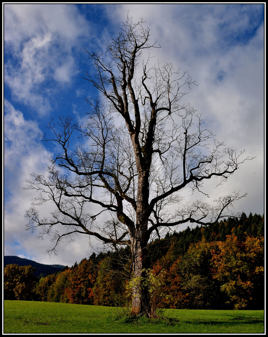 Als ich diesen Baum sah, ...