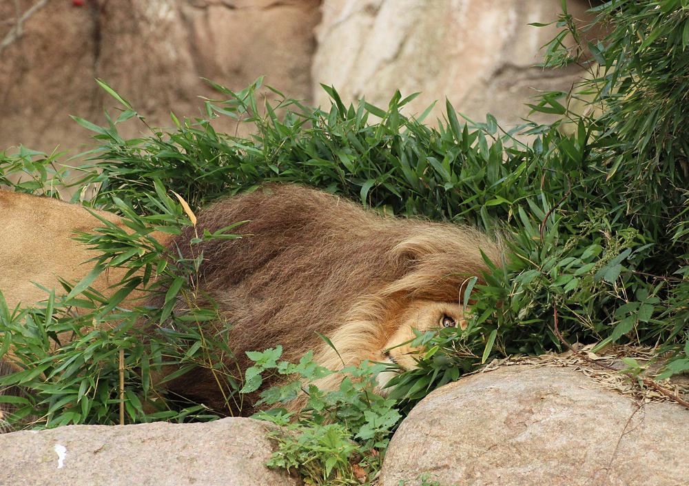 Als Kopfkissen ist dieser Busch jedoch nicht....