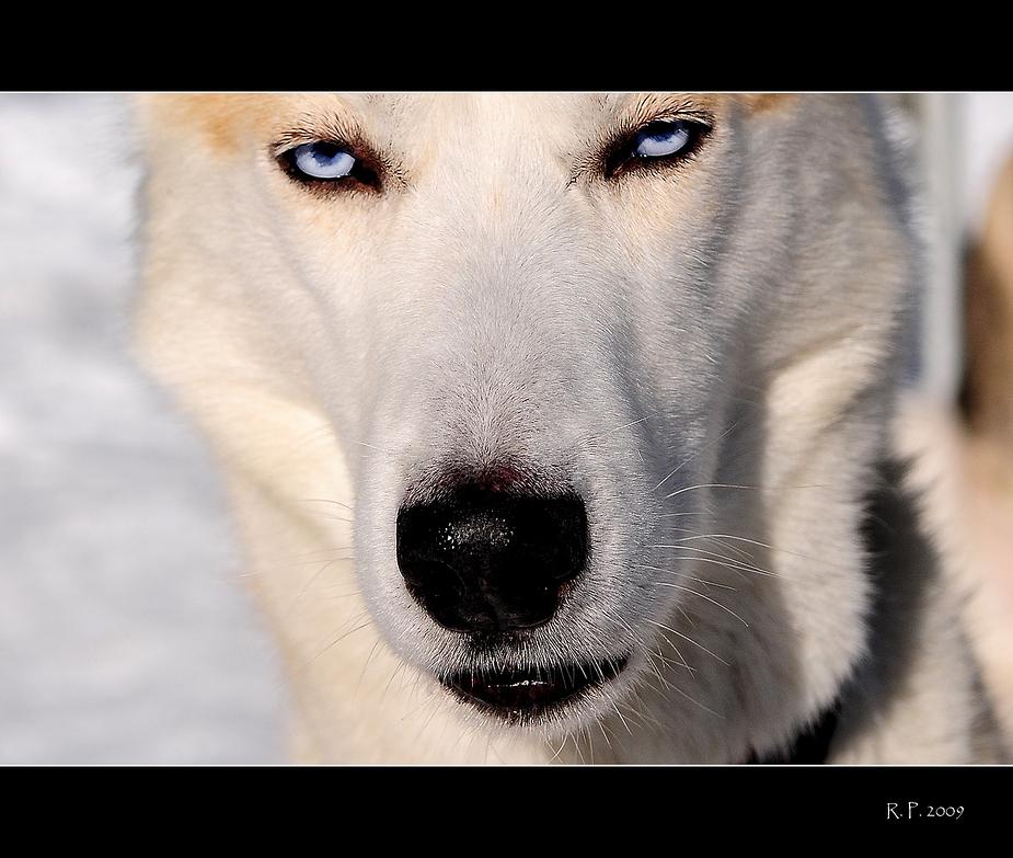 ...als Rotkäppchen und der böse Wolf erfunden wurde...